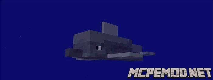 dolphins mcpe